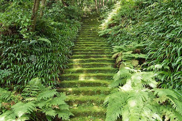 ※写真は妙法寺の石段でハイキングコースには含まれません