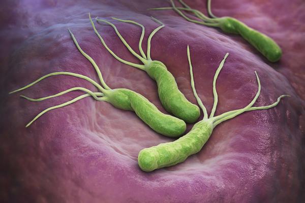 ピロリ菌イメージ
