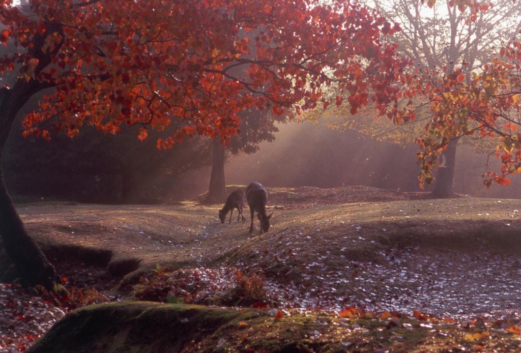 写真提供:一般財団法人奈良県ビジターズビューロー