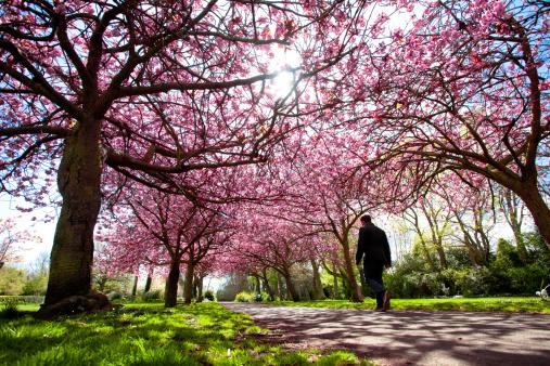 春本番に歩きたい!桜や藤が見られる関東地方のおすすめ絶景スポット7選